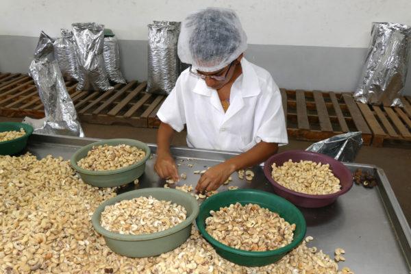 Cashews werden nach 4 verschiedenen Sorten von einer Frau in Schüsseln sortiert
