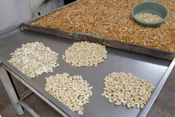 Cashewkerne sortiert in 4 Qualitäten